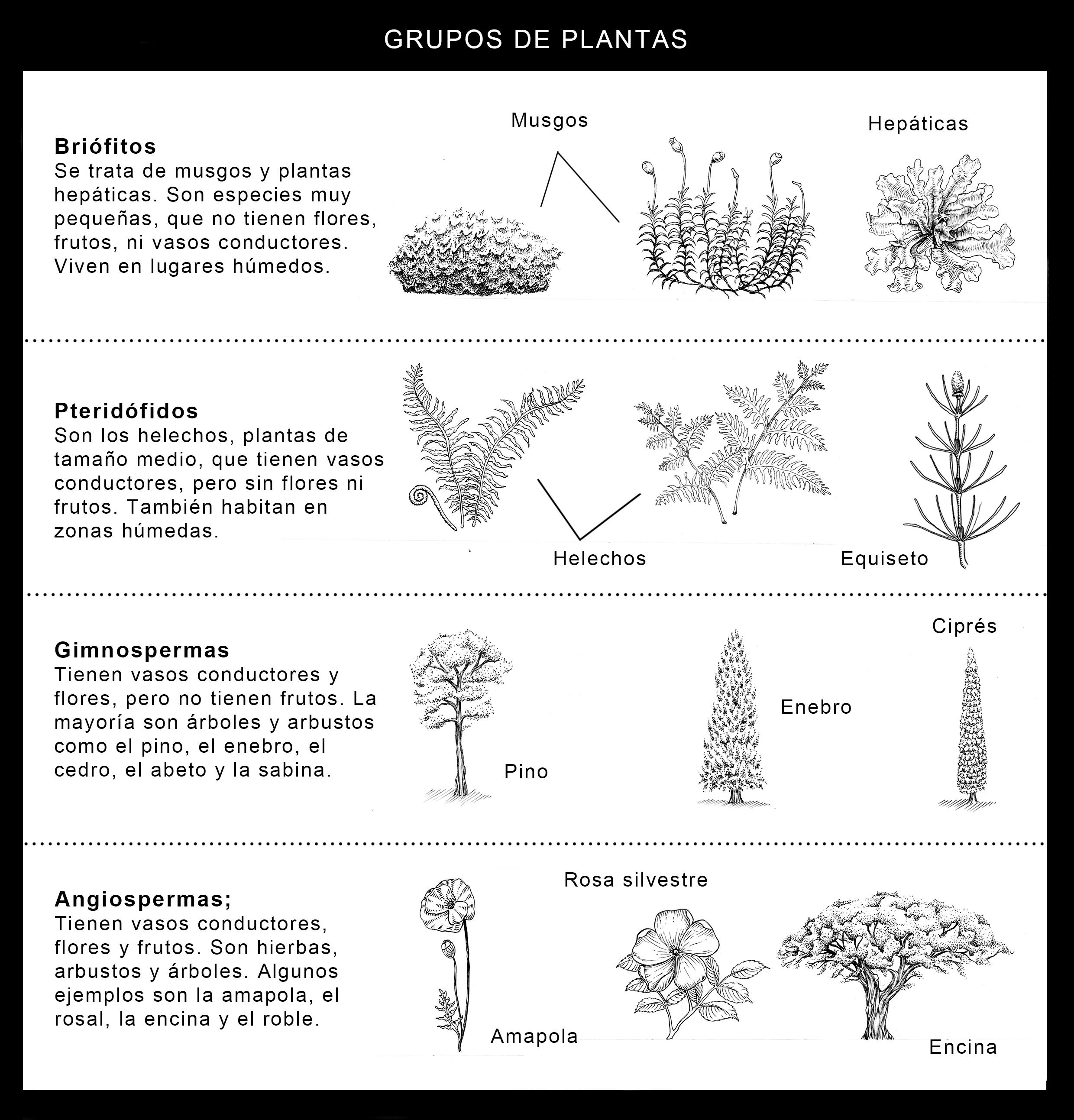 Taxonom a vegetal utilidad de la taxonom a de las plantas for Que son plantas ornamentales ejemplos