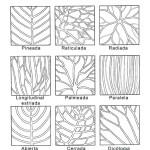 Venaciones de hojas