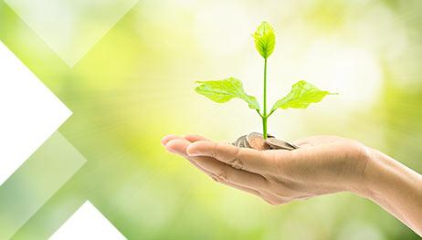 Beneficios Económicos de un jardín vertical