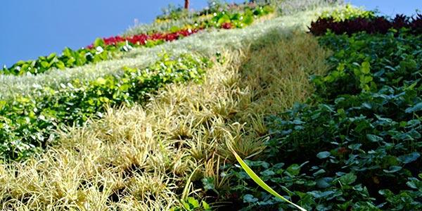 Criterios de selección de plantas para jardines verticales