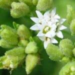 taxonomía-de-las-plantas